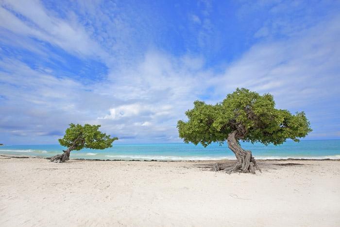 Карибски плаж, остров Аруба. Достъпна екзотика.