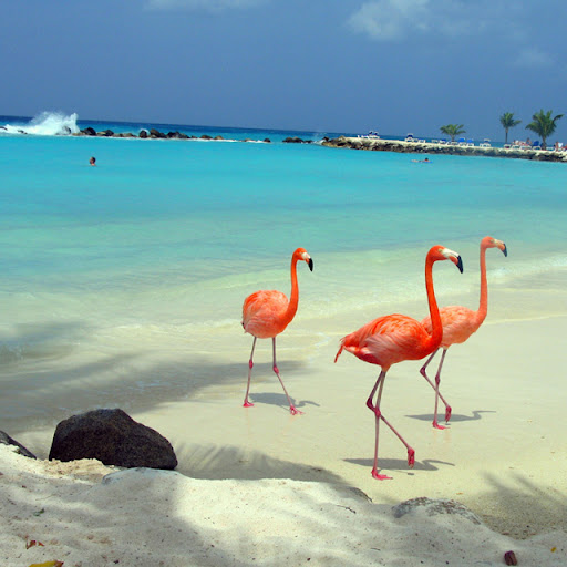 Уникални животински видове на остров Аруба