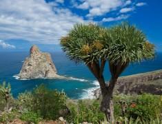 Екскурзия до Тенерифе