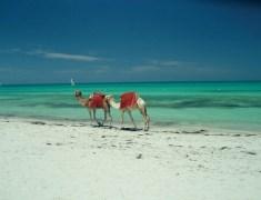 Майски празници в Тунис